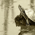 Painted Turtle On Mud In A Marsh by Robert Hamm