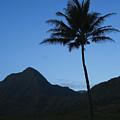 Palm And Blue Sky by Dana Edmunds - Printscapes