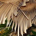 Palm Bark by Kenna Westerman