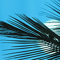 Palm Frond Silhouette by Ron Dahlquist - Printscapes