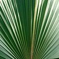Palm by Heather Boguski