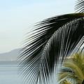 Palm by Jason Blalock