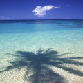 Palm Shadows by Ron Dahlquist - Printscapes