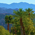 Palm Springs Mountains by Richard Jenkins