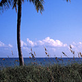 Palm Tree And Sea Grass On The Water Under Blue Sky by William Kuta