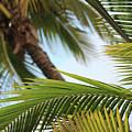 Palm Trees by Wilko Van de Kamp
