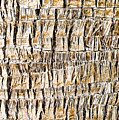 Palm Trunk by Tom Gowanlock