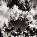 Palms Blowing In The Wind by Lawrence Knutsson