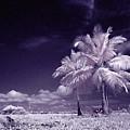 Palms  by Galeria Trompiz