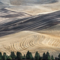 Palouse Field 2740 by Bob Neiman