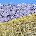 Panoramic View Of Desert Gold Yellow by Panoramic Images