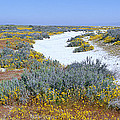 Panoramic View Of White Salt And Desert by Panoramic Images