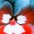 Pansy Power 86 by Pamela Critchlow
