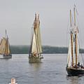 Parade Of Sails by Jesse MacDonald