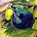 Paradise Bird by Jason Sentuf