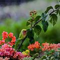 Parakeet South Maui by Robert Morris