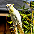 Parrot by Angela Aird