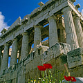 Parthenon With Poppies by Michele Burgess