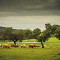 Pasturing Cows by Carlos Caetano