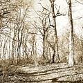 Path In A Forest by A Gurmankin