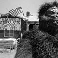 Patriotic Gorilla Pitchman July 4th Mattress Sale Tucson Arizona 1991 by David Lee Guss