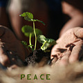 Peace by Greg Sampson