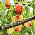 Peaches by Kristin Elmquist