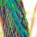Peacock Feathers by Donna Bentley