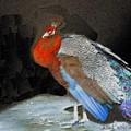 Peacock II by Chuck Kugler