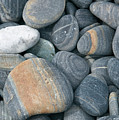 Pebbles by American School