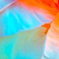Petals by Gwyn Newcombe