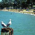 Pilot Bay Beach 4 - Mount Maunganui Tauranga New Zealand by Selena Boron