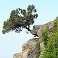 Pine Tree On A Rock by Goce Risteski