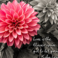 Pink Dahlia With John Lennon Quote by Dawn Key