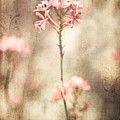 Pink Flower Canvas by Alissa Beth Photography