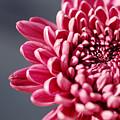 Pink Flower by Jill Reger