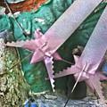 Pink Ribbon Altar by Glen Allison