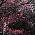 Pink Trees by Craig Perry-Ollila