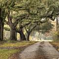 Plantation Drive Live Oaks  by Dustin K Ryan
