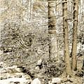 Pocono Mountain Stream, Pennsylvania, Digital Art by A Gurmankin