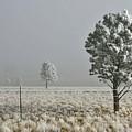 Pogonip Frosty Morning by Judithann O'Toole