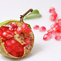 Pomegranate  by Yedidya yos mizrachi