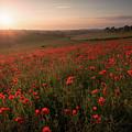 Poppy Field by Ian Hufton