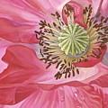 Poppy by Marlyn Munter