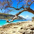 Porte D Enfer, Guadeloupe by Cristina Stefan