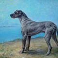 Portrait Of A Great Dane by MotionAge Designs