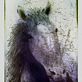Portrait Of A Horse by Arline Wagner