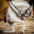 Portugal Lusitano Horse by Ernesto Santos