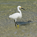 Posing White Egret Bird by DejaVu Designs