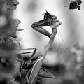 Praying Mantis And Honey Bee by Frank Wilson